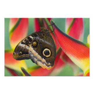 Sammamish, Washington. Tropical Butterflies 36 Photo Print