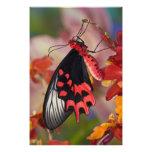 Sammamish, Washington. Tropical Butterflies 3 Photo Art