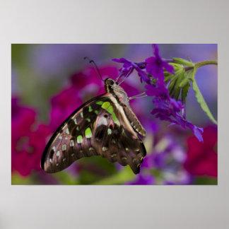 Sammamish, Washington. Tropical Butterflies 45 Poster