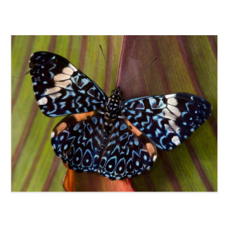 Sammamish, Washington. Tropical Butterflies 54 Postcard
