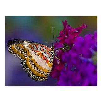 Sammamish, Washington. Tropical Butterflies 64 Postcard