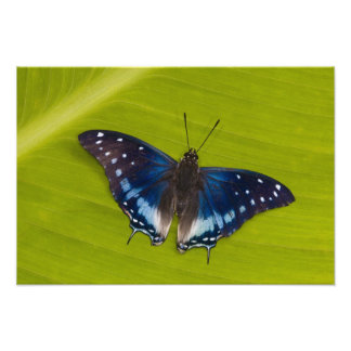 Sammamish, Washington. Tropical Butterflies 65 Photo