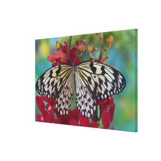 Sammamish, Washington. Tropical Butterflies 67 Canvas Print
