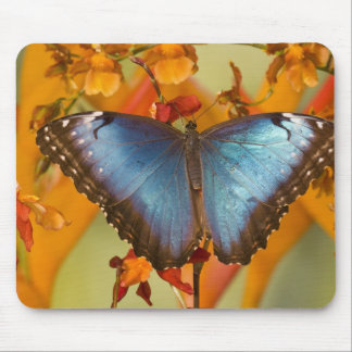 Sammamish Washington Tropical Butterfly 10 Mouse Pad