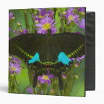 Sammamish, Washington Tropical Butterfly 15 3 Ring Binders