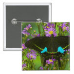 Sammamish, Washington Tropical Butterfly 15 2 Inch Square Button