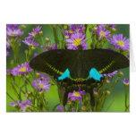 Sammamish, Washington Tropical Butterfly 15 Greeting Card