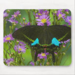 Sammamish, Washington Tropical Butterfly 15 Mouse Pad
