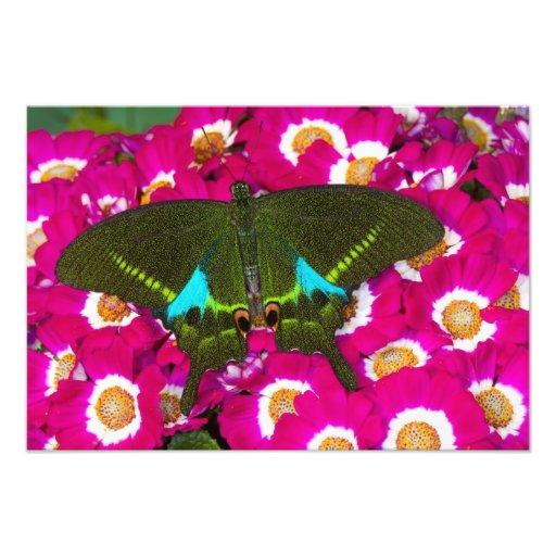 Sammamish, Washington Tropical Butterfly 15 Photo
