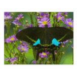 Sammamish, Washington Tropical Butterfly 15 Postcard