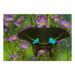 Sammamish, Washington Tropical Butterfly 15 Poster