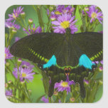 Sammamish, Washington Tropical Butterfly 15 Square Stickers