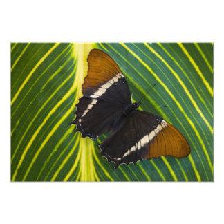 Sammamish, Washington Tropical Butterfly 39 Photo Print