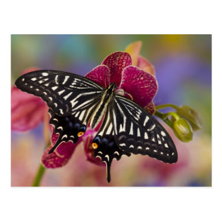 Sammamish, Washington Tropical Butterfly 3 Postcard