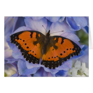 Sammamish Washington Tropical Butterfly 4 Card