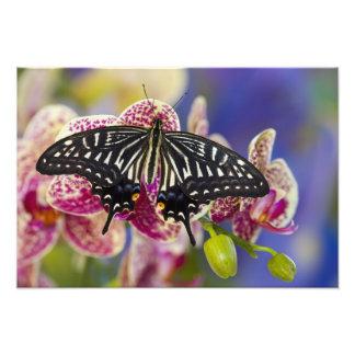 Sammamish, Washington Tropical Butterfly 5 Photo Print