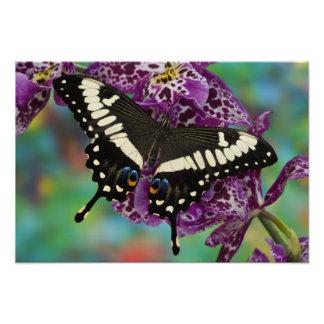 Sammamish, Washington Tropical Butterfly 6 Photo Print