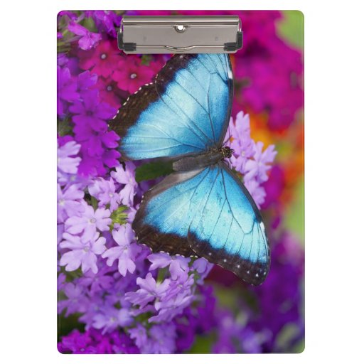 Sammamish Washington Tropical Butterfly 7 Clipboard