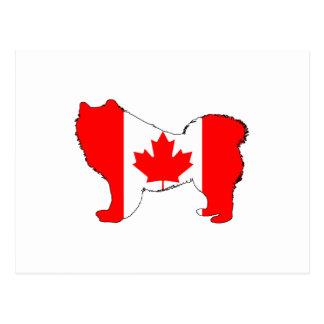 Samoyed Canada Postcard
