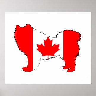 Samoyed Canada Poster