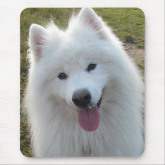 Samoyed dog beautiful photo mousemat, mousepad
