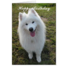 Samoyed dog happy birthday custom greeting card