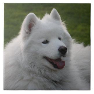 Samoyed Dog Tile
