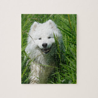 Samoyed In Grass Puzzle