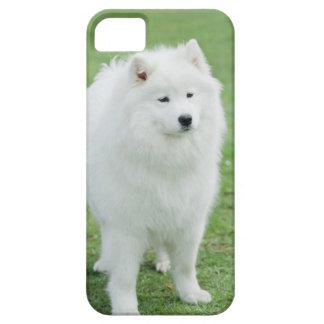 Samoyed iPhone 5 Case