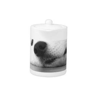 Samoyed Photo Dog White