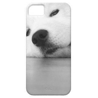 Samoyed Photo Dog White iPhone 5 Cases