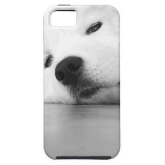 Samoyed Photo Dog White iPhone 5 Cover