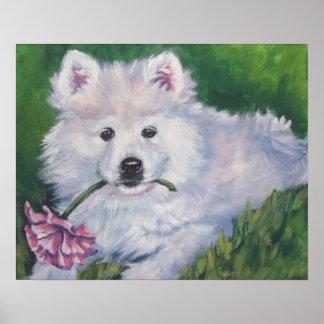 Samoyed puppy art print