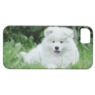 Samoyed puppy iPhone 5 case