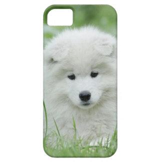 Samoyed puppy iPhone 5 cases