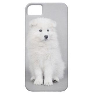 Samoyed puppy iPhone 5 covers