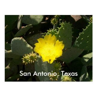 San Antonio, Texas Postcard
