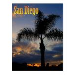 San Diego Palm Tree Sunset Postcard