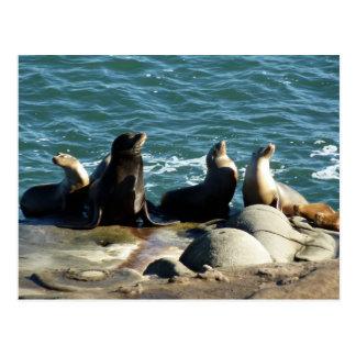 San Diego Sea Lions Postcard