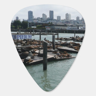 San Francisco and Pier 39 Sea Lions City Skyline Pick