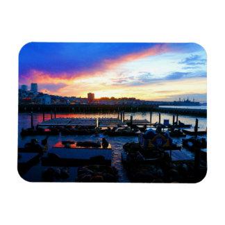 San Francisco Pier 39 Sea Lions #4-1 Magnet
