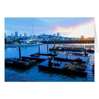 San Francisco Pier 39 Sea Lions #5-1 Card