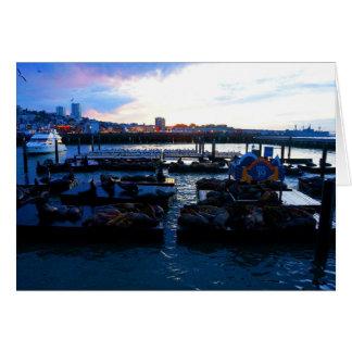 San Francisco Pier 39 Sea Lions #6-1 Card