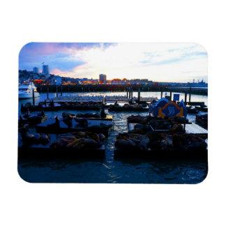 San Francisco Pier 39 Sea Lions #6-1 Magnet