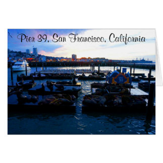 San Francisco Pier 39 Sea Lions #6-2 Card