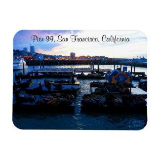 San Francisco Pier 39 Sea Lions #6-2 Magnet