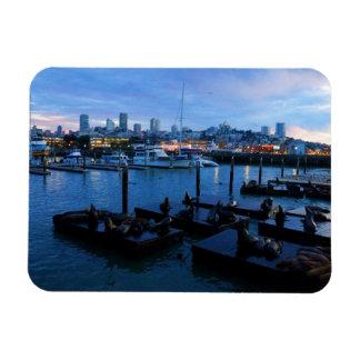 San Francisco Pier 39 Sea Lions #7-1 Magnet