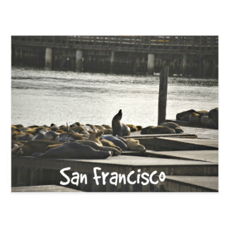 San Francisco Seals Postcard