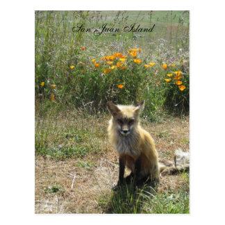San Juan Island Fox Postcard