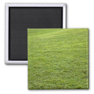 San Juan, Puerto Rico - Green grass is Refrigerator Magnets